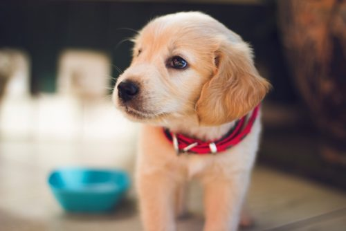 puppy standing with food bowl