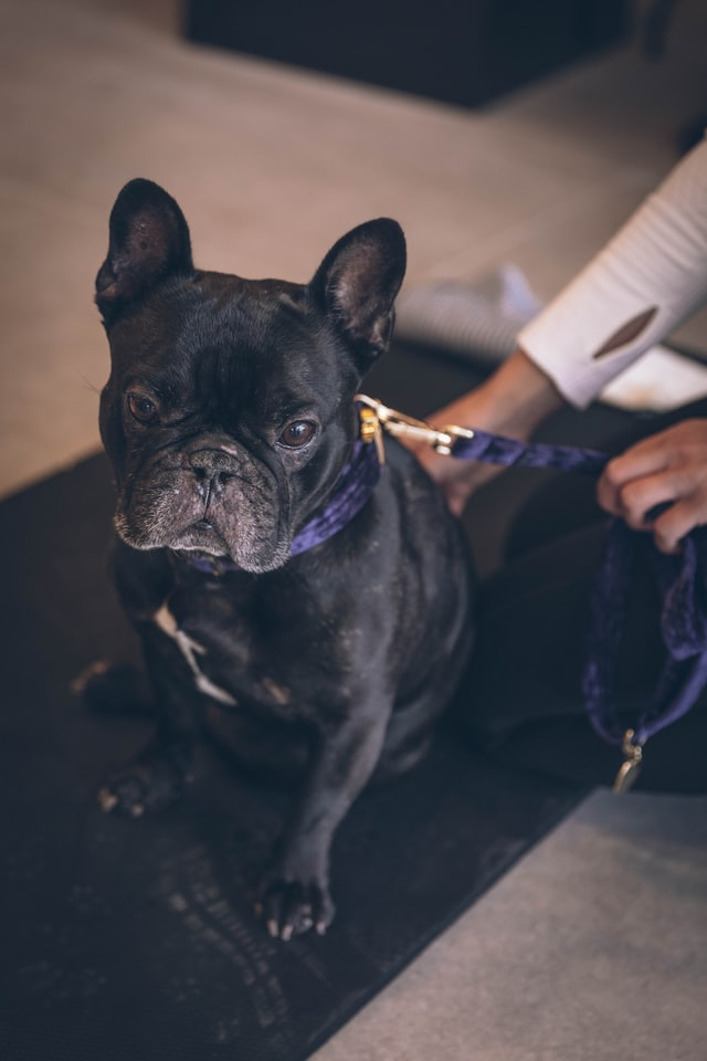 muscle testing for pets